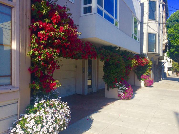 thiết kế nhà hiện đại kết hợp với mặt tiền nhiều hoa