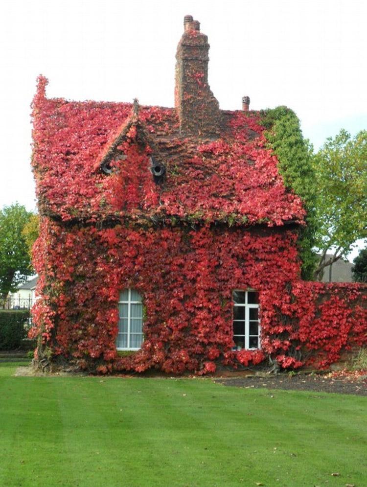 thiết kế nhà với hoa leo đỏ rực