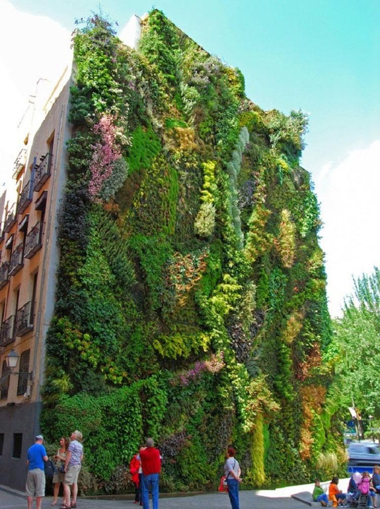 thiết kế nhà trồng cây dây leo tránh bức xạ