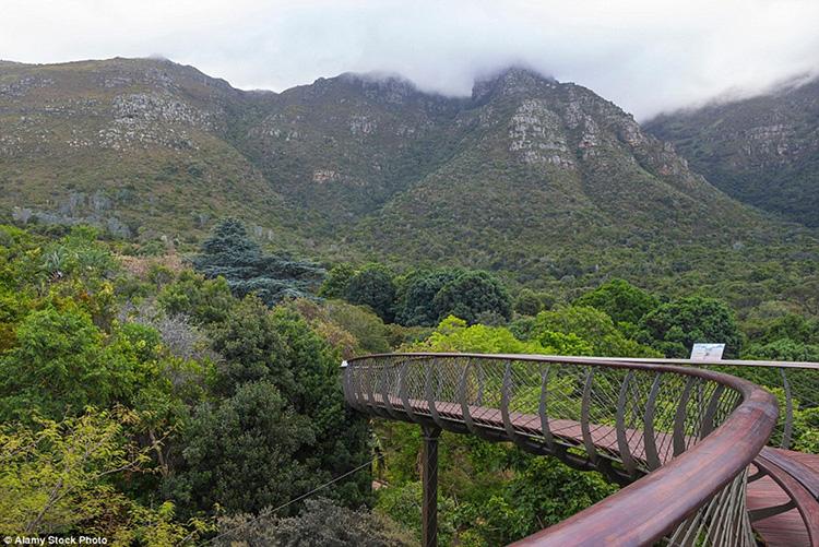 Vườn thực vật quốc gia Kirstenbosch, Nam Phi