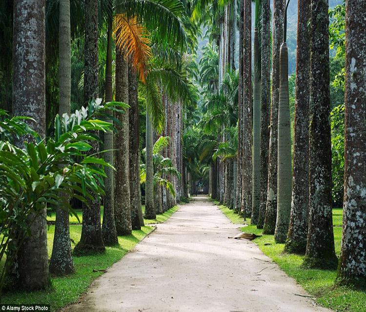 Vườn thực vật, Rio de Janeiro, Brazil