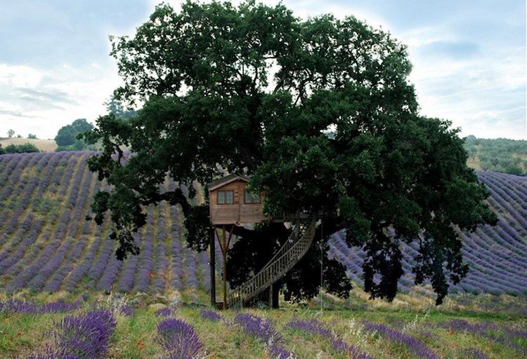 khách sạn thiết kế trên cây