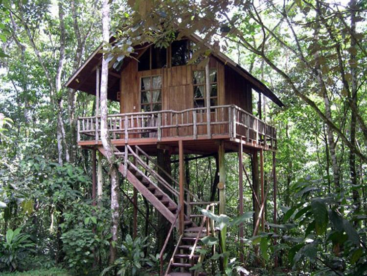 vẻ đẹp khách sạn trên cây